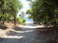 Path to the sea through the pine trees.