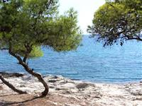 Pine trees at the Waters Edge
